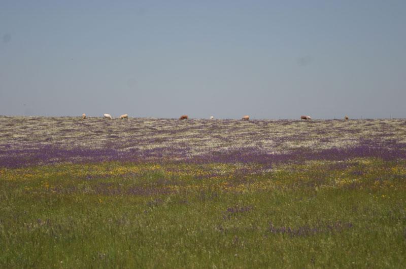 Primavera en los Llanos