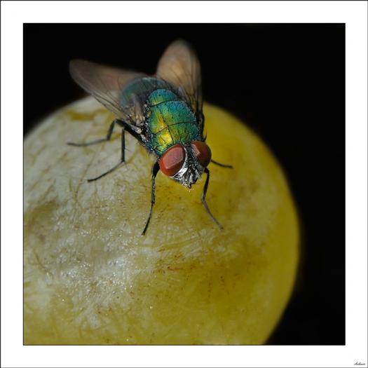 La mosca y su mundo