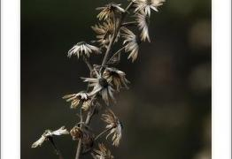 Restos del otoño